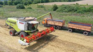 «Епіцентр Агро» зібрав озиму пшеницю з рекордною врожайністю 6,86 т/га